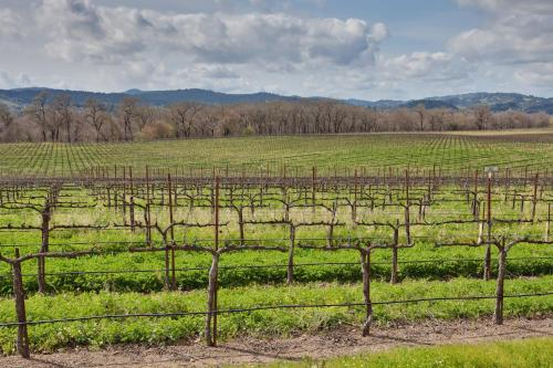 Hampton Inn & Suites Windsor Sonoma Wine Country