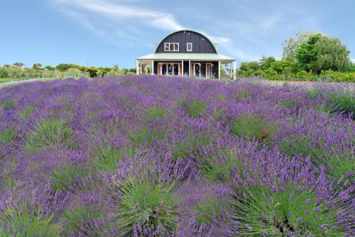 Lavender Hill - Accommodation - Riverhead