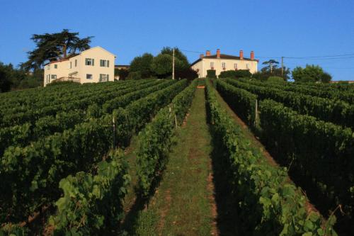 Domaine du Fontenay - Accommodation - Villemontais
