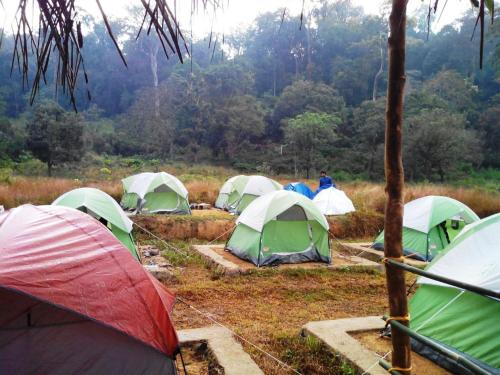 Camping In Remote Coorg