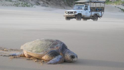 Mabibi Beach, Elephant Coast, Mabibi Camp, South Africa.