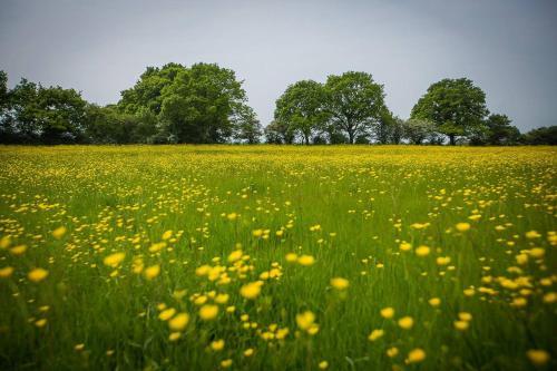 Coldharbour Farm, Barham's Mill Road, Egerton, Nr. Ashford TN27 9DD, England.