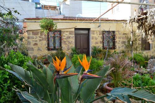 Mystery Garden Guest House