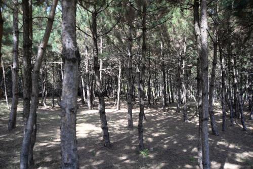 Mengen Nesilce Tatil Köyü