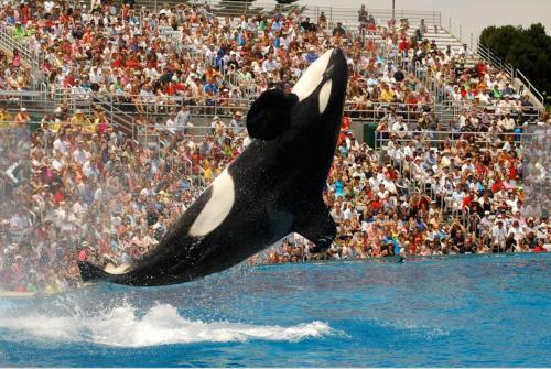 Oceancatcher Of Mission Beach - San Diego, CA 92109