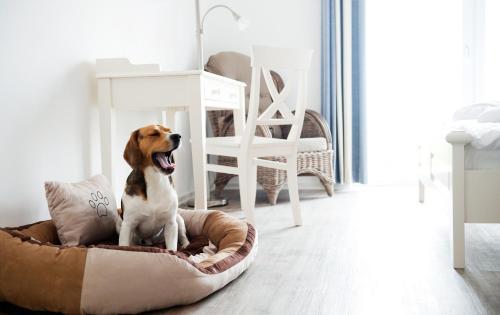 Hotel-overnachting met je hond in Pharisäerhof - Nordstrand
