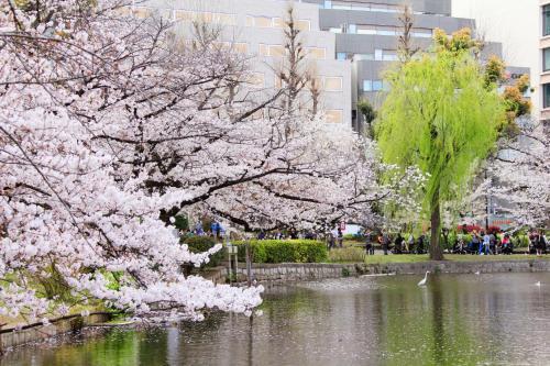 Centurion Hotel Ueno photo 78