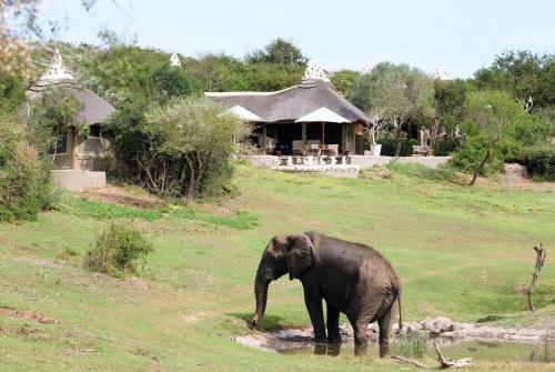 Safari Lodge- Amakhala Game Reserve photo 3