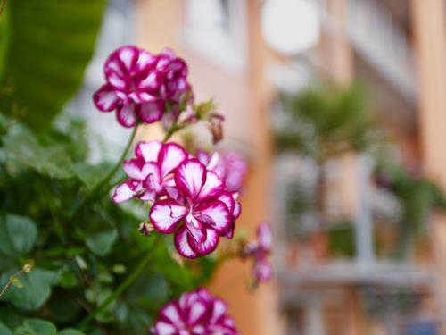 Hotel Alfa Zentrum photo 72