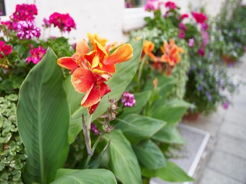 Hotel Alfa Zentrum photo 35