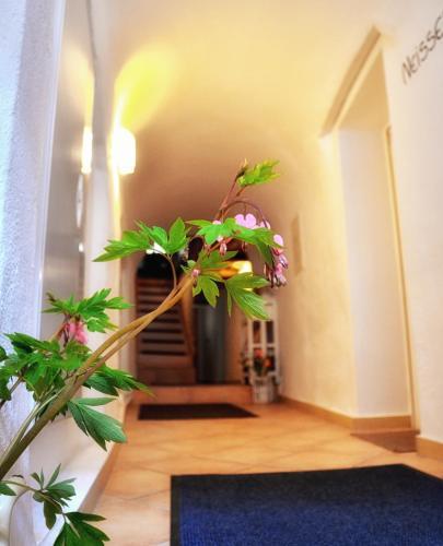 Apartments Altstadthaus Görlitz
