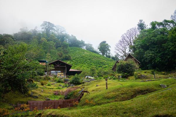Boquete Tree Trek Mountain Resort
