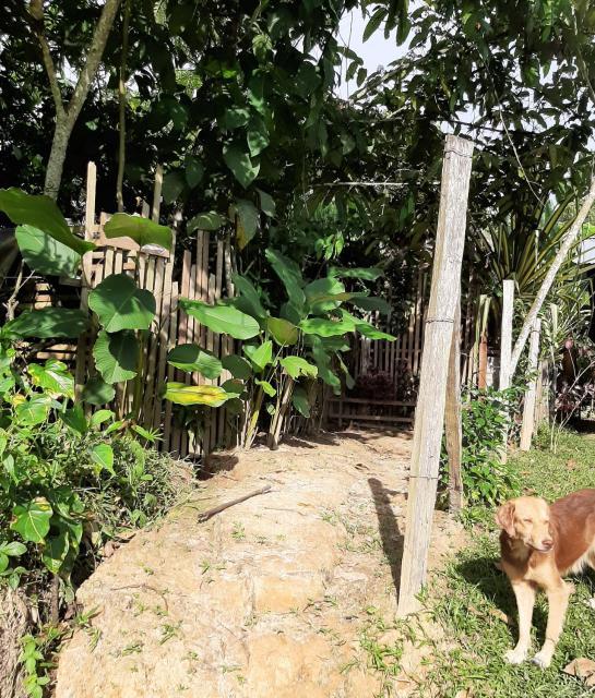 Casa do Xingu