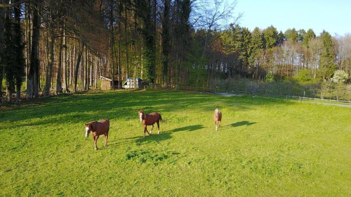 Zapfs Bauernhof