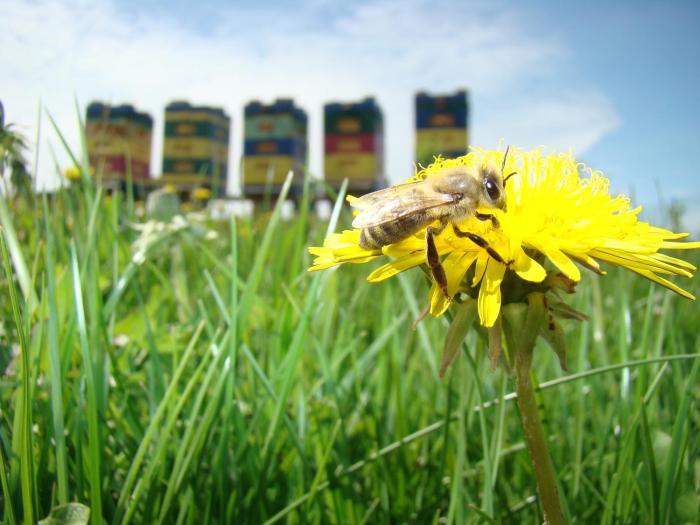 Zagroda Warmińska Pszczoła