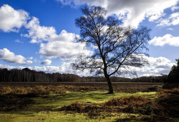 Sway Road, Brockenhurst, Hampshire, SO42 7SH, England.