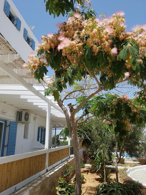 Antiparos 84007, Greece.