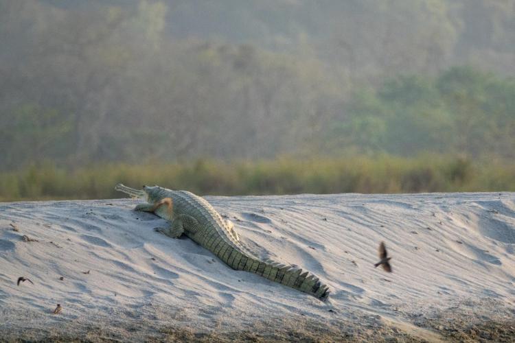 Bardia National Park, Nepal.