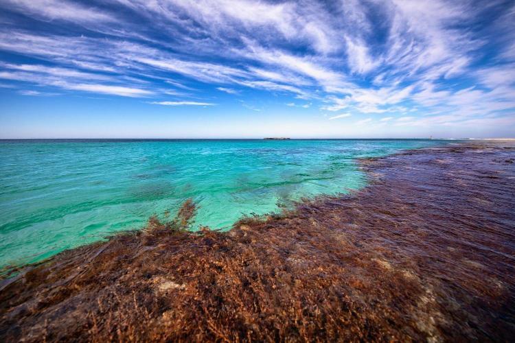 Strue Road, Rottnest Island, Western Australia, 6161, Australia.