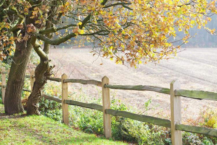 Low Heath, Petworth, West Sussex GU28 0HG. England.