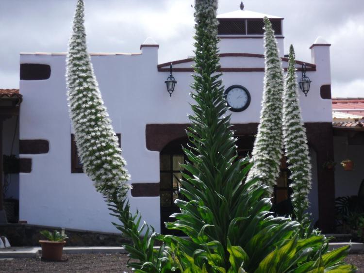 Camino de los Mohos 8, 38260 Tejina, San Cristóbal de La Laguna, Tenerife, Spain.