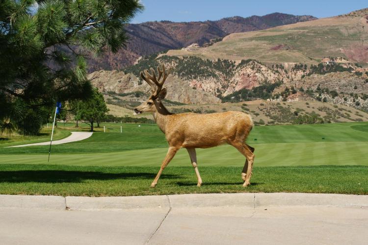 3320 Mesa Road, Colorado Springs, CO 80904, United States.