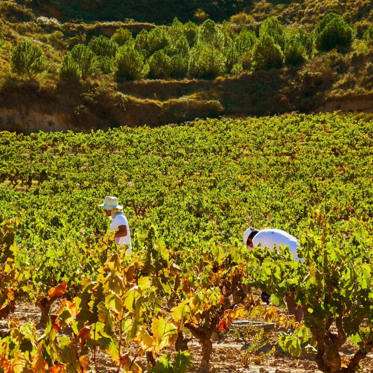 Km 9, Carretera de Nalda, Albelda de Iregua, La Rioja 26120, Spain.