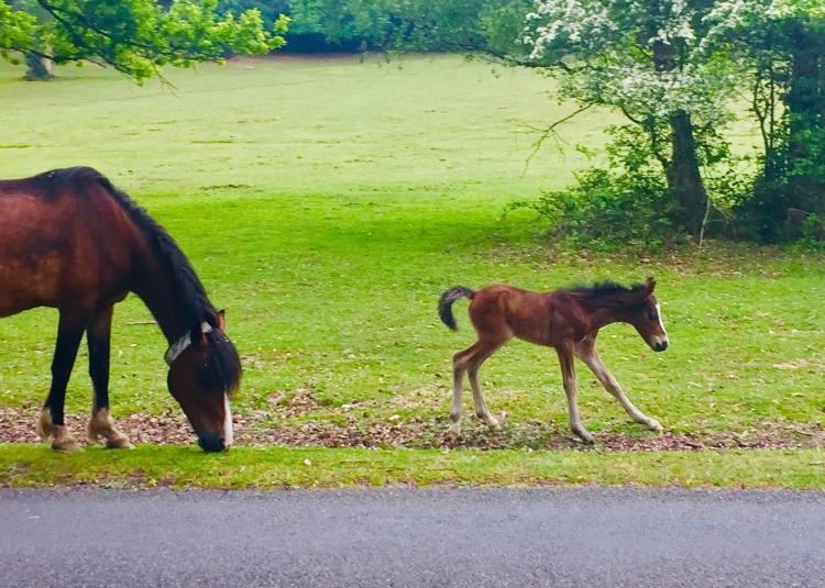 174 Woodlands Road, Woodlands, Netley Marsh, New Forest, near Southampton, Hampshire SO40 7GL, United Kingdom.