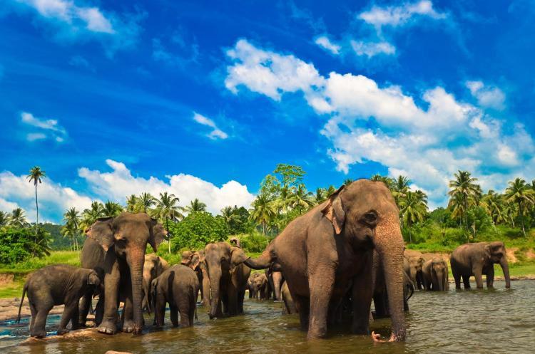 Tangalle Road, Batheegama West, Dikwella South, 81200, Sri Lanka.