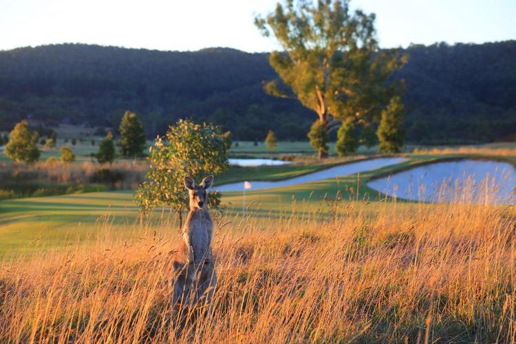 42 Melba Highway, Yering, 3770, Victoria, Australia.