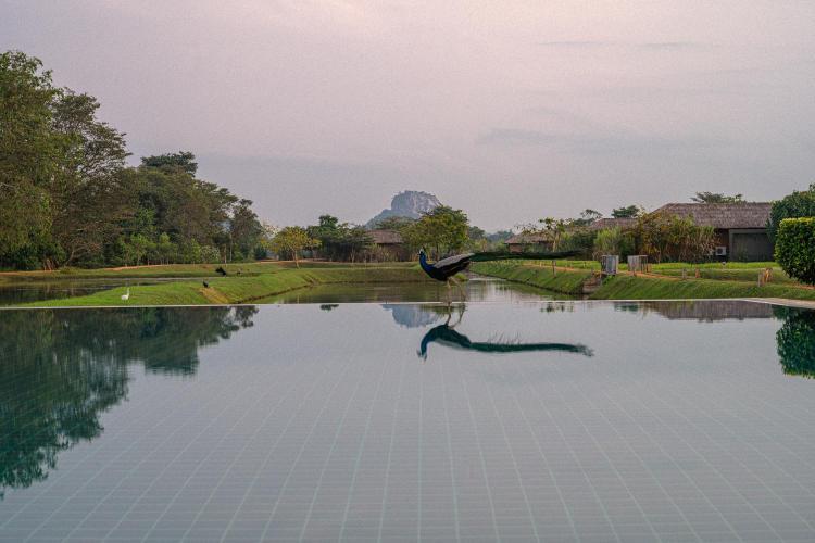 Indigaswewa, Sigiriya, Sri Lanka.