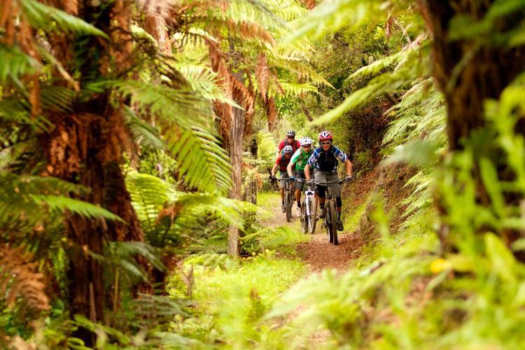 351 Kearoa Road, Horohoro, Rotorua 3077, New Zealand.
