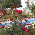 Blue Beach - фотографии гостиницы и номеров