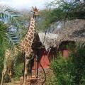 Leopard Rock Lodge - hotellet bilder