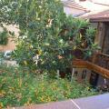Osmanli Marco Pasha Hotel -酒店和房间的照片