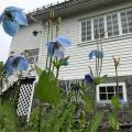 Arctic Garden - chambres d'hôtel et photos