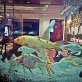 Aquarium Hotel - фотографии гостиницы и номеров