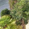 Apartmani Levarda - ホテルと部屋の写真