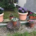 Berlin-Residenz mit Gartenterrasse - Hotel- und Zimmerausstattung Fotos