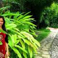 Alta Cebu Resort - fotos do hotel e o quarto