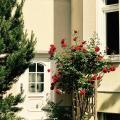 Bürgerpark Apartments - hotel and room photos