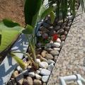 Villa avec piscine a Midoun Djerba - hotel a pokoj fotografie