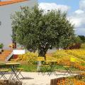 Cantar Do Grilo - Turismo Rural - hotell och rum bilder