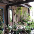 San Ignacio - zdjęcia hotelu i pokoju