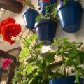 Hotel Cortijo Los Gallos -होटल और कमरे तस्वीरें