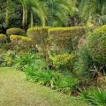 Palm villa -صور الفندق والغرفة