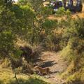 Naserian Mara Camp - hotel og værelse billeder