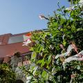 Alkion - szálloda és szoba-fotók