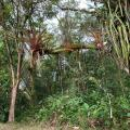 El Suzanne Rainforest Lodge - хотел и стая снимки