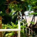 Bacolet Beach Club -호텔 및 객실 사진
